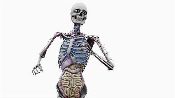 Computer animation of the male upper body running showing internal computer animation of the male upper body running showing internal organs on a white background stock video footage dissolve ccuart Gallery