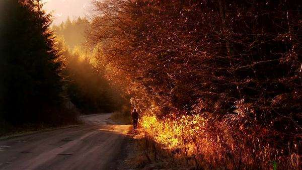 A lone man walks up the side of a forest  road as the sun sets, his breath showing Royalty-free stock video