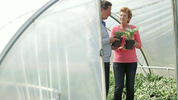Mature couple looking at plants in green house Royalty-free stock video