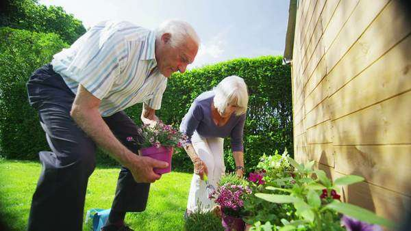 Happy retired couple gardening together in the summer sunshine. In slow motion. Royalty-free stock video