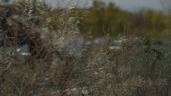 Rack focus shot of plant blowing in desert Royalty-free stock video
