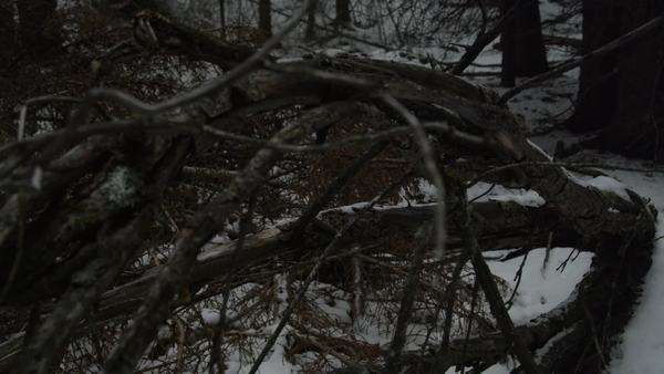 Medium shot of tree branches in snowy forest Royalty-free stock video