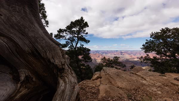 Camera moves past tree as clouds roll over the Grand Canyon. Royalty-free stock video