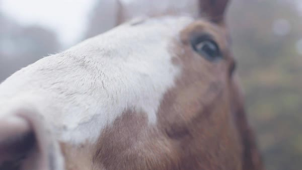 Close-up shot of a horse in a pen Royalty-free stock video