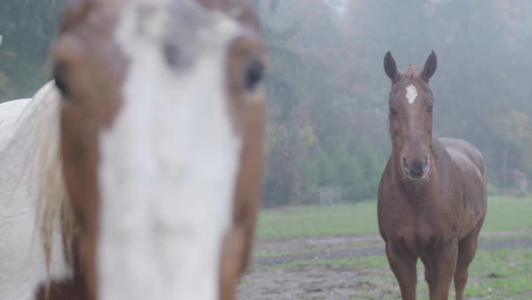 Medium close up shot of two horses Royalty-free stock video