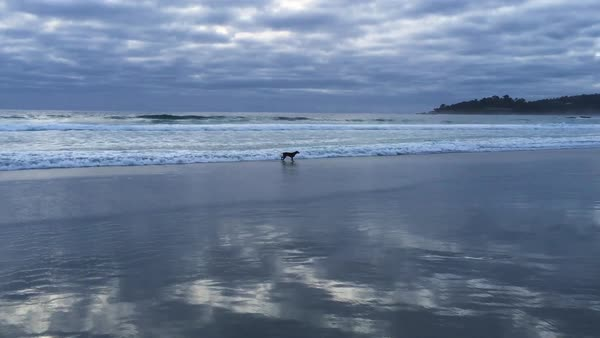 Panning shot of a dog running on a beach Royalty-free stock video