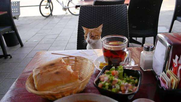 Handheld shot of a cat sitting on a chair near a table full of food Royalty-free stock video
