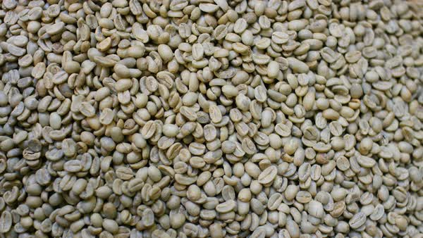 Unroasted Coffee Beans >> Full Frame Shot Of Picked Unroasted Coffee Beans D200 114 041