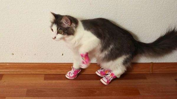 Cat in pink shoes sits on floor near white wall and then jumps Royalty-free stock video