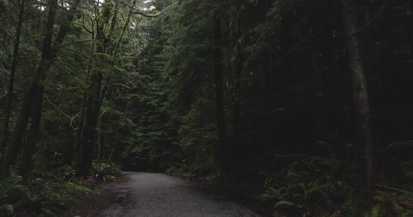 Point-of-view shot of a road among trees from a moving car Royalty-free stock video