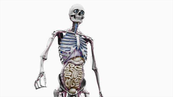 Computer animation of the male upper body walking showing internal computer animation of the male upper body walking showing internal organs on a white background stock video footage dissolve ccuart Gallery