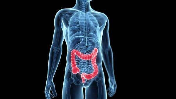 Human large intestine, animation. The large intestine is responsible ...