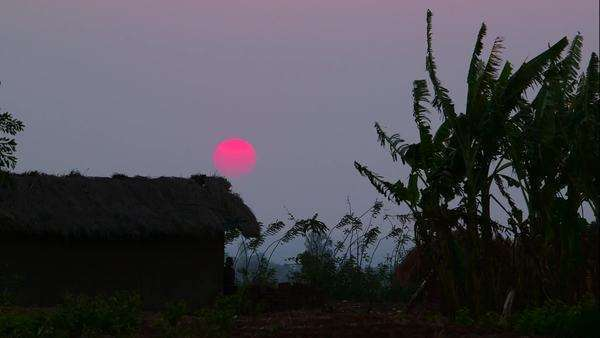 Trees and a hut silhouetted against a sunset in Malawi Royalty-free stock video