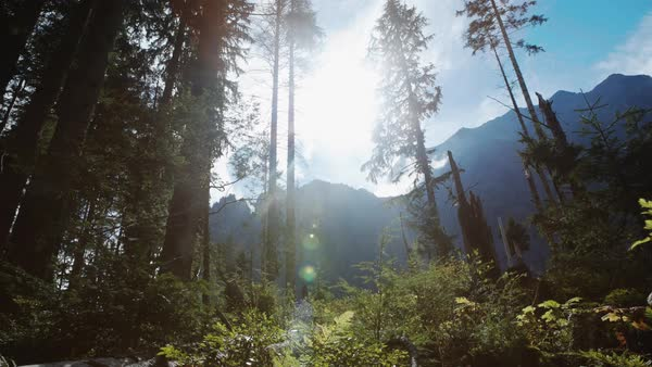 Lens flare tilt down from tops of trees Royalty-free stock video