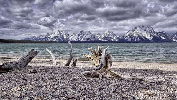 Dolly shot showing dry tree branches on a beach and a distant alpine skyline Rights-managed stock video
