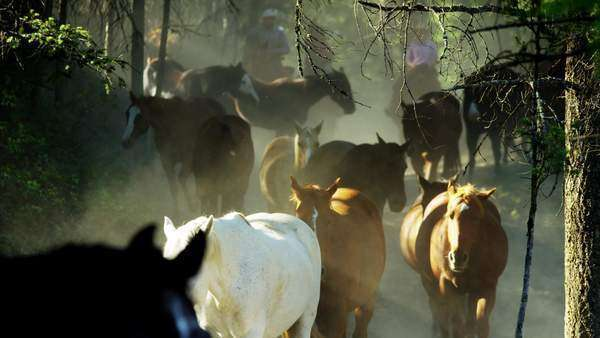 Slow motion shot of horses along dusty trail in forest Royalty-free stock video
