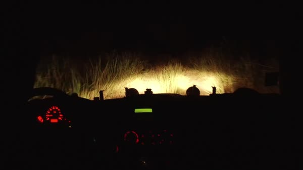 Medium shot of people traveling by car at night on a dirt road in Africa Rights-managed stock video