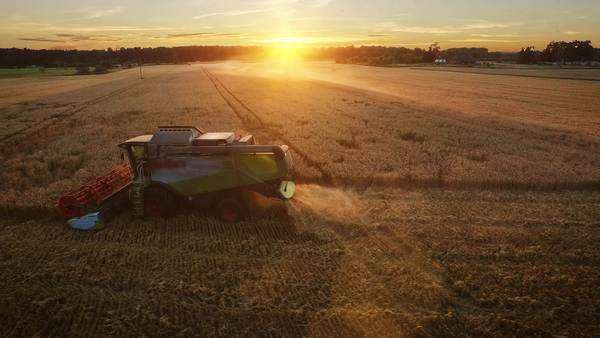 Aerial drone shot of a combine harvester working in a field at sunset. Royalty-free stock video