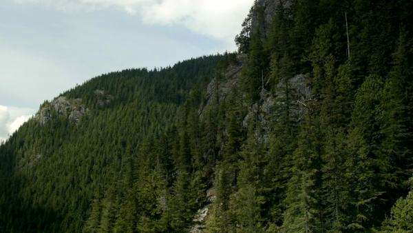 Moving shot of trees on a mountain in the summer Royalty-free stock video