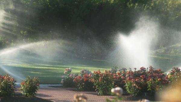 Slow motion of Wide shot pan of Garden sprinklers spraying flowers and lawn in garden Royalty-free stock video