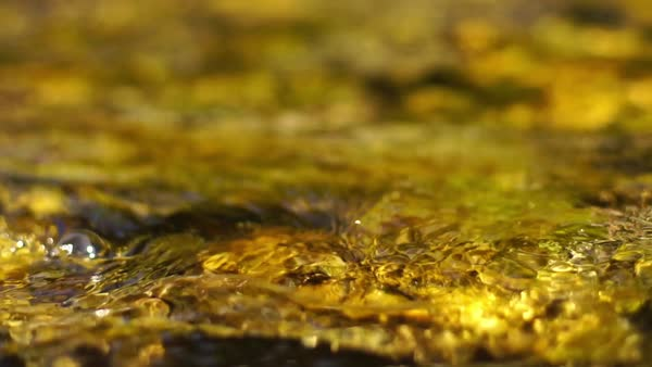 Close up shot of a frog in a brook Rights-managed stock video
