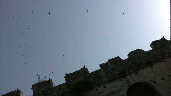 Swallow birds flock nearby ancient ruins Royalty-free stock video