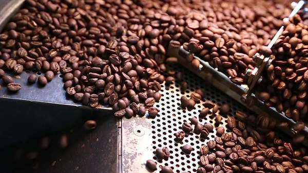 Close-up shot of coffee fresh out of the roaster Royalty-free stock video