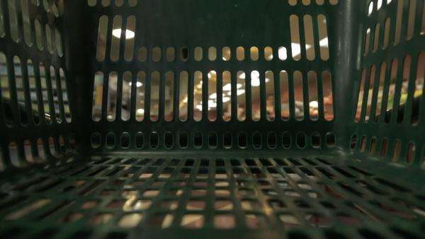 POV shot of shopping cart being pushed around in a grocery store Royalty-free stock video
