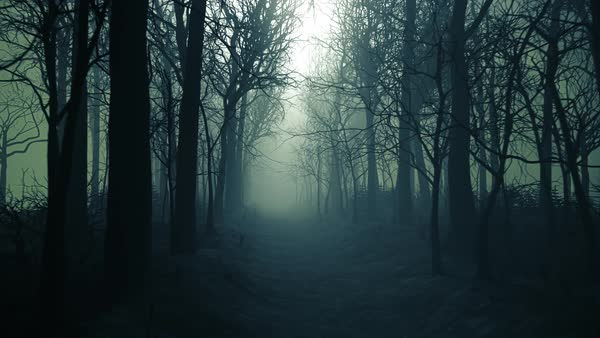 Seamless Looping Animation Of Winter Forest Pathway In A Fog
