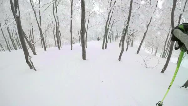 Point-of-view shot of a person sliding down in a forest Royalty-free stock video