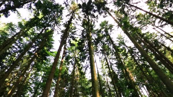 Medium shot of a forest during daytime Royalty-free stock video