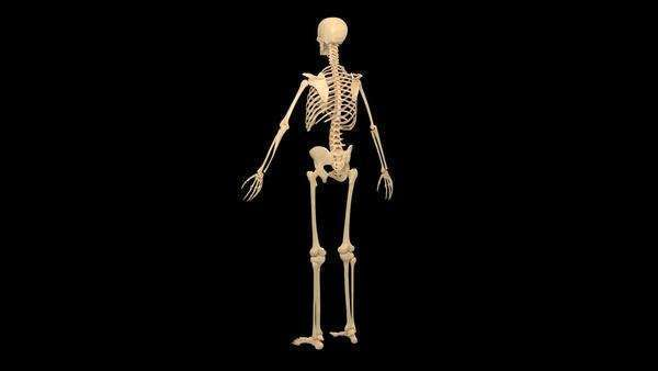 Animation of the male skeletal system against a black background. For the same clip on a transparent background, see clip number K002 2492. Royalty-free stock video