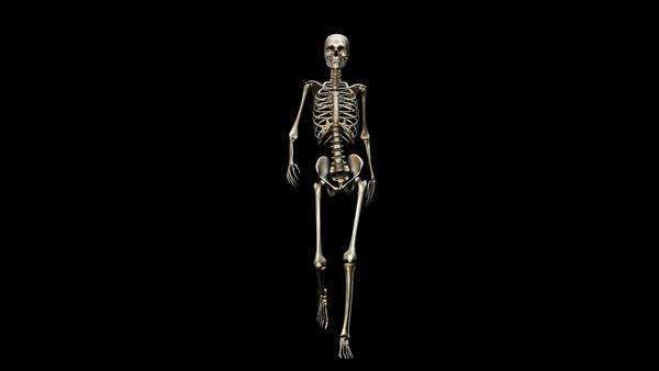 Computer animation of the female skeletal system walking on a black background, front view. Royalty-free stock video