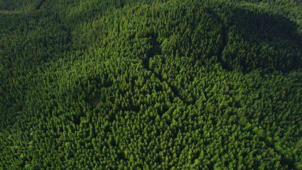 Oregon forest, aerial shot Royalty-free stock video