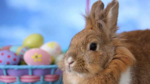 Bunny and Easter basket Royalty-free stock video
