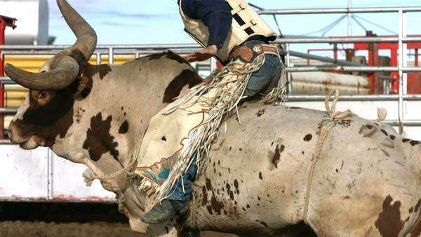 Bull riding, slow motion Royalty-free stock video