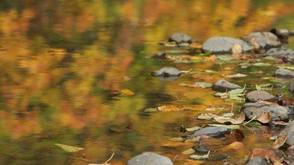 Rippling brook in fall Royalty-free stock video