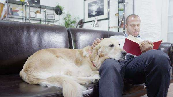 Man relaxing at home on the sofa and reading a book, with his loyal pet golden retriever beside him. Royalty-free stock video