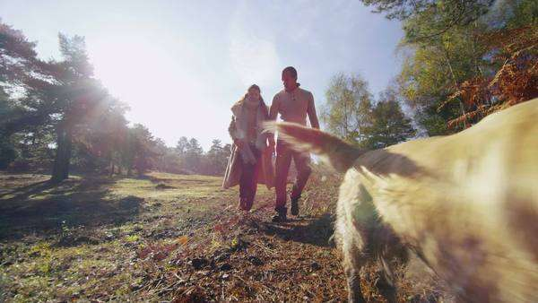 An attractive couple are walking their happy and energetic dog through a forest in the sunshine. In slow motion. Royalty-free stock video