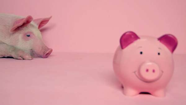 Piglet lying behind piggybank against pink background Royalty-free stock video