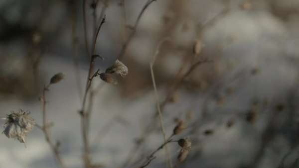 Dried vegetation in winter Royalty-free stock video