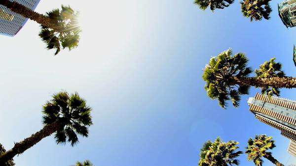 California Palm Trees in Wide Angle Royalty-free stock video