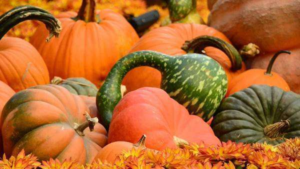 Fall Season Display Royalty-free stock video