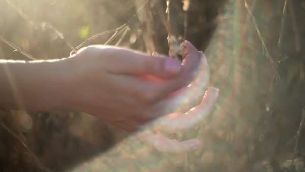 Solar glare on hands gently touching grasses outdoors Royalty-free stock video