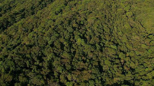 Flying over trees to reveal city, Rio de Janeiro, Brazil Royalty-free stock video