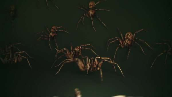 An army of spiders, animated Royalty-free stock video