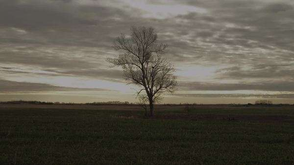 Long shot of tree standing on meadow at sunset Royalty-free stock video