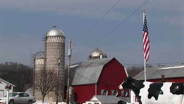 An American flag and a cow statue stand in front of a barn and silos. Royalty-free stock video