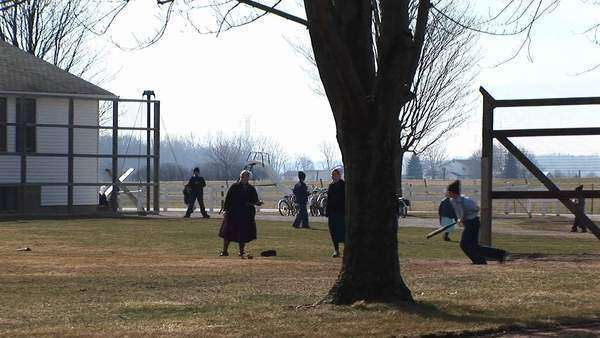 A group of Amish boys and girls are playing baseball outdoors in the fall. Royalty-free stock video