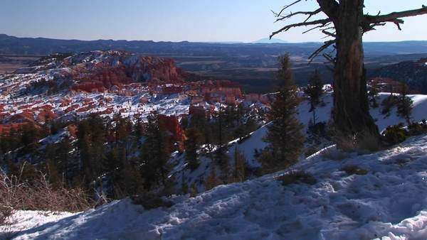 Medium-shot of pine trees and snow in Bryce Canyon National Park. Royalty-free stock video